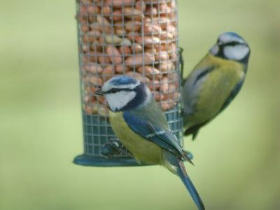 Create A Wildlife Friendly Garden